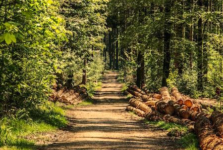 Wald Natur outdoor sport